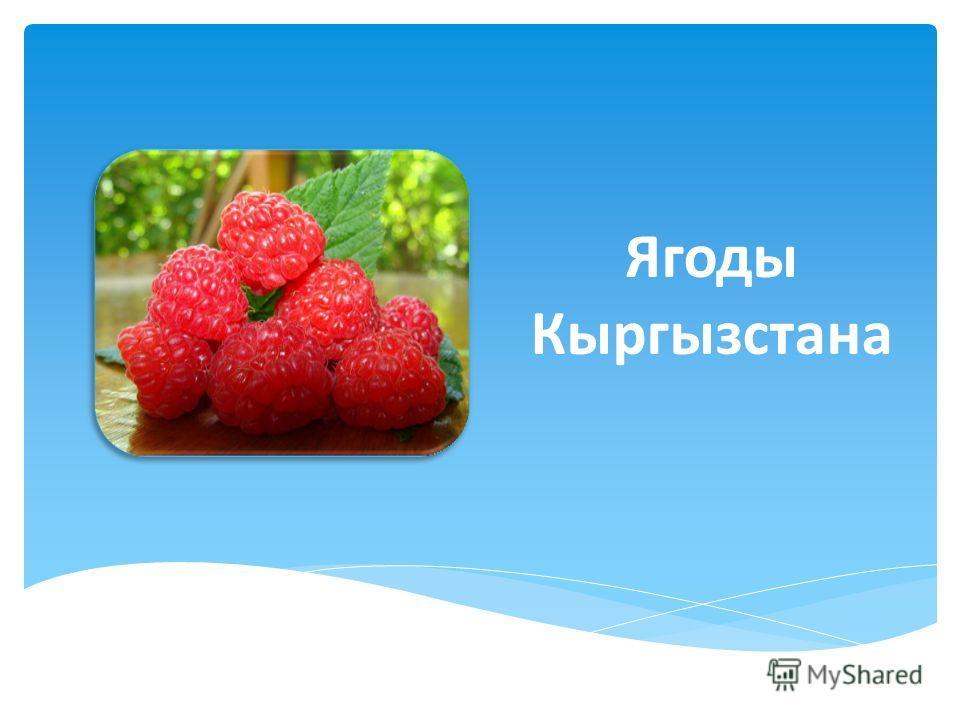 Ягоды Кыргызстана