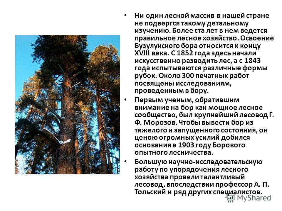 Ни один лесной массив в нашей стране не подвергся такому детальному изучению. Более ста лет в нем ведется правильное лесное хозяйство. Освоение Бузулукского бора относится к концу XVIII века. С 1852 года здесь начали искусственно разводить лес, а с 1