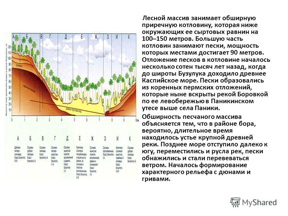 Лесной массив занимает обширную приречную котловину, которая ниже окружающих ее сортовых равнин на 100–150 метров. Большую часть котловин занимают пески, мощность которых местами достигает 90 метров. Отложение песков в котловине началось несколько со