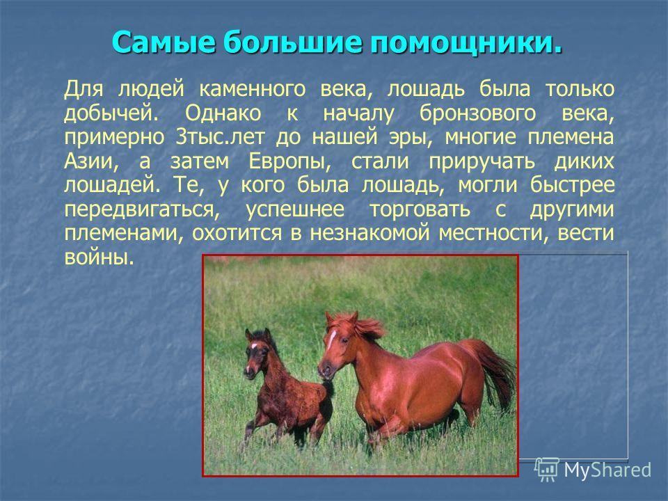 Самые большие помощники. Для людей каменного века, лошадь была только добычей. Однако к началу бронзового века, примерно 3 тыс.лет до нашей эры, многие племена Азии, а затем Европы, стали приручать диких лошадей. Те, у кого была лошадь, могли быстрее