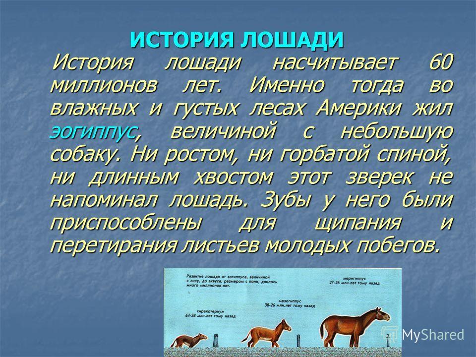 ИСТОРИЯ ЛОШАДИ История лошади насчитывает 60 миллионов лет. Именно тогда во влажных и густых лесах Америки жил эогиппус, величиной с небольшую собаку. Ни ростом, ни горбатой спиной, ни длинным хвостом этот зверек не напоминал лошадь. Зубы у него были