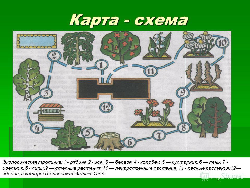 Экологическая тропинка: 1