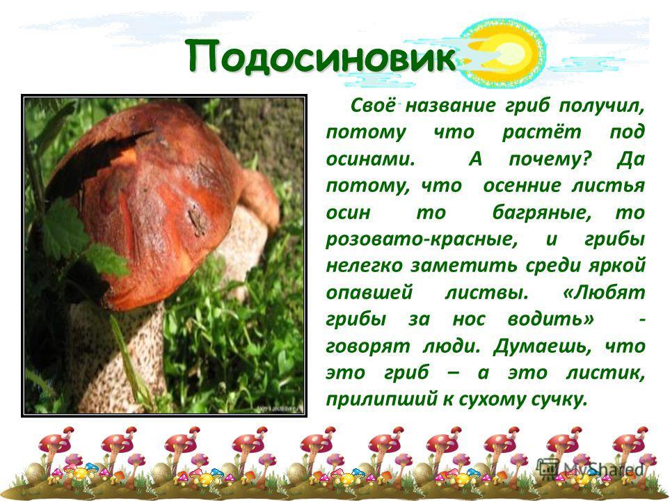 Подосиновик Своё название гриб получил, потому что растёт под осинами. А почему? Да потому, что осенние листья осин то багряные, то розовато-красные, и грибы нелегко заметить среди яркой опавшей листвы. «Любят грибы за нос водить» - говорят люди. Дум