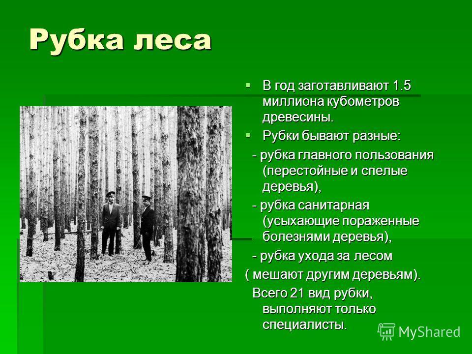 Рубка леса В год заготавливают 1.5 миллиона кубометров древесины. В год заготавливают 1.5 миллиона кубометров древесины. Рубки бывают разные: Рубки бывают разные: - рубка главного пользования (перестойные и спелые деревья), - рубка главного пользован