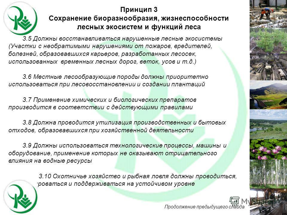 3.5 Должны восстанавливаться нарушенные лесные экосистемы (Участки с необратимыми нарушениями от пожаров, вредителей, болезней, образовавшихся карьеров, разработанных лесосек, использованных временных лесных дорог, веток, усов и т.д.) 3.6 Местные лес