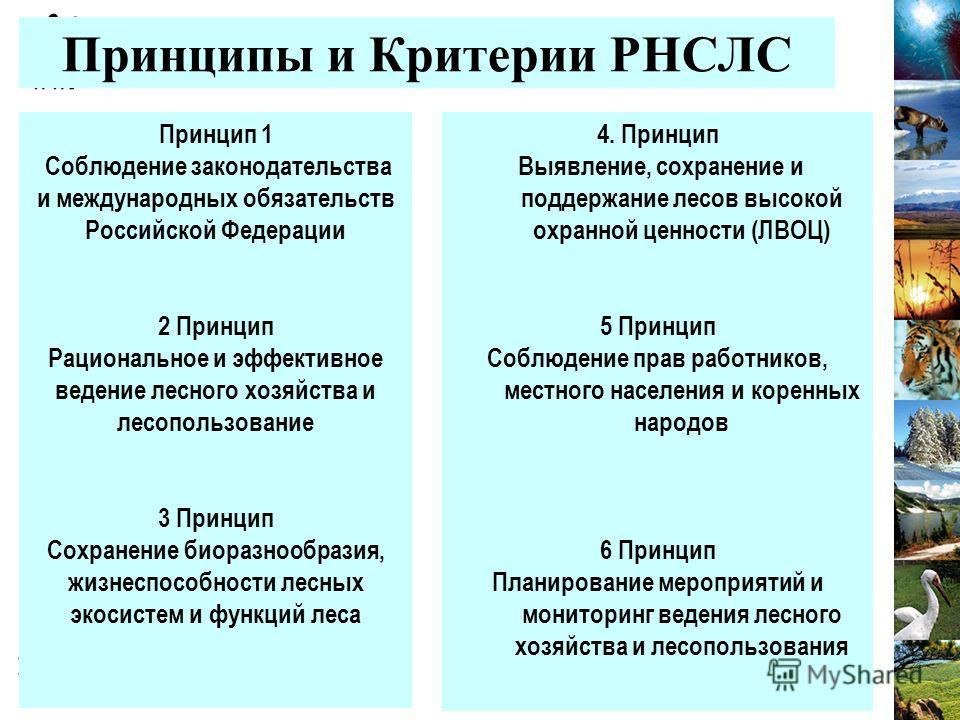 Принципы и Критерии РНСЛС Принцип 1 Соблюдение законодательства и международных обязательств Российской Федерации 2 Принцип Рациональное и эффективное ведение лесного хозяйства и лесопользование 3 Принцип Сохранение биоразнообразия, жизнеспособности