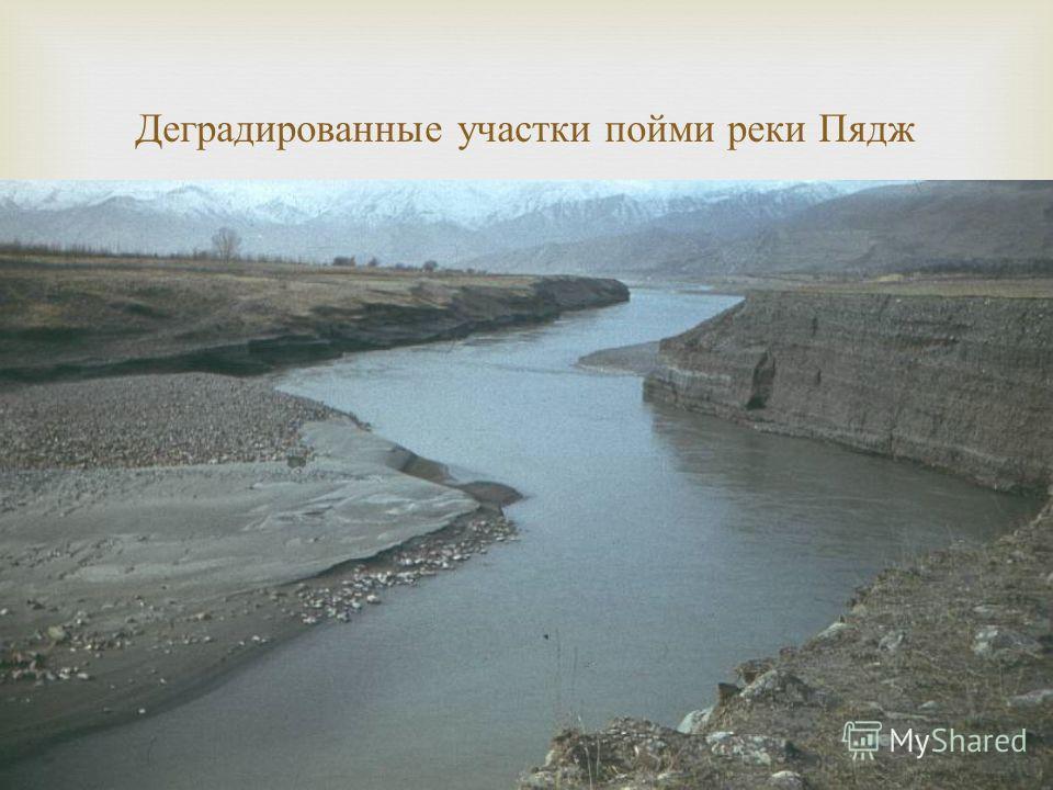 Деградированные участки пойми реки Пядж