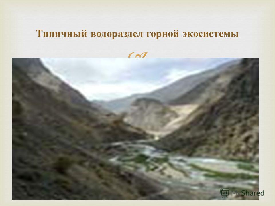 Типичный водораздел горной экосистемы