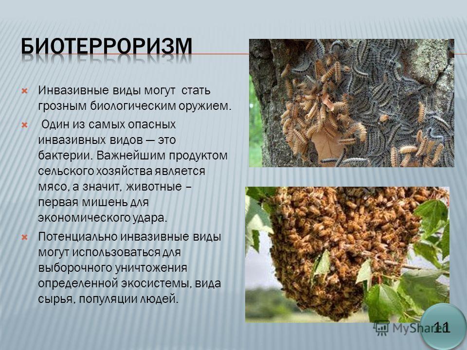 Инвазивные виды могут стать грозным биологическим оружием. Один из самых опасных инвазивных видов это бактерии. Важнейшим продуктом сельского хозяйства является мясо, а значит, животные – первая мишень для экономического удара. Потенциально инвазивны