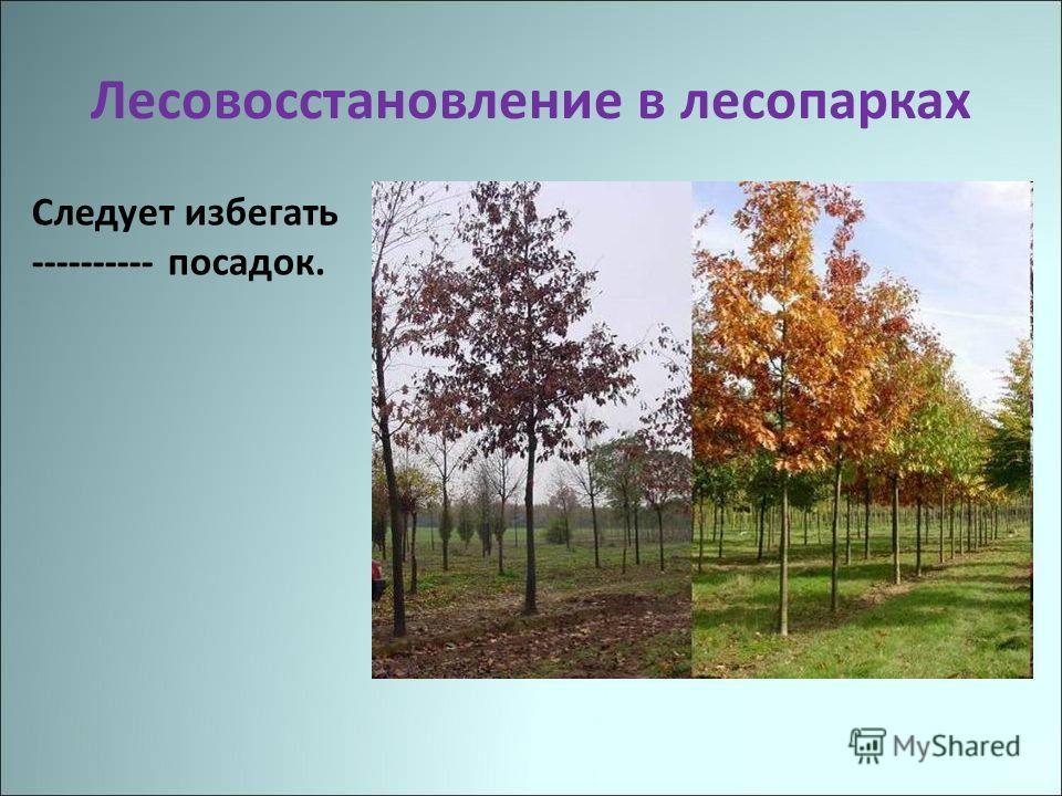 Лесовосстановление в лесопарках Следует избегать ---------- посадок.
