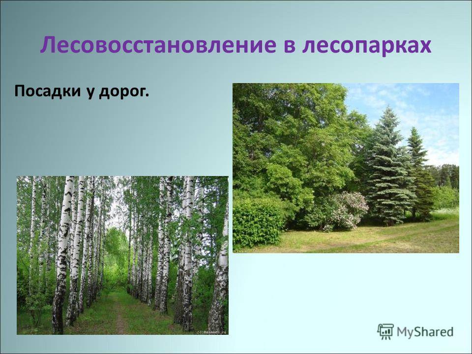 Лесовосстановление в лесопарках Посадки у дорог.