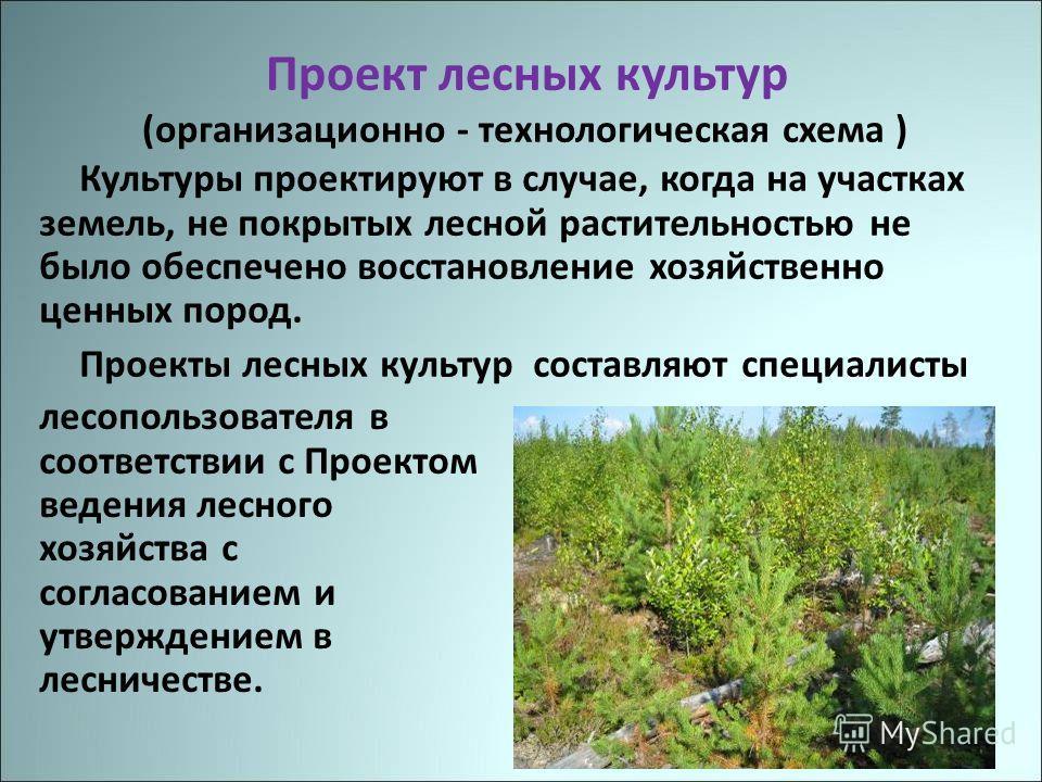 Проект лесных культур (организационно - технологическая схема ) Культуры проектируют в случае, когда на участках земель, не покрытых лесной растительностью не было обеспечено восстановление хозяйственно ценных пород. Проекты лесных культур составляют