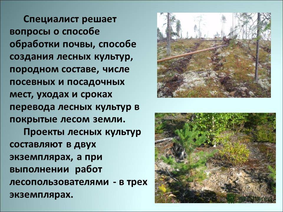 Специалист решает вопросы о способе обработки почвы, способе создания лесных культур, породном составе, числе посевных и посадочных мест, уходах и сроках перевода лесных культур в покрытые лесом земли. Проекты лесных культур составляют в двух экземпл