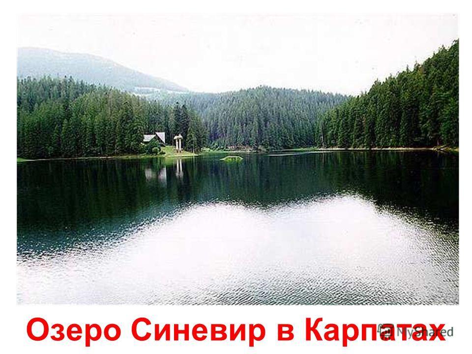 Горнолыжный курорт Славское. Гора Тростян.