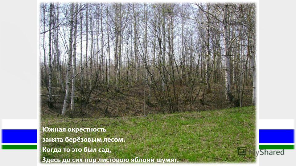 Южная окрестность занята берёзовым лесом. Когда-то это был сад, Здесь до сих пор листовою яблони шумят.