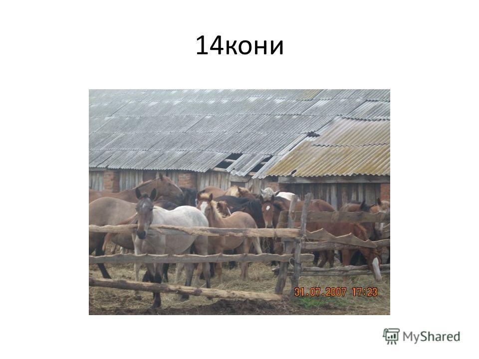 14 кони