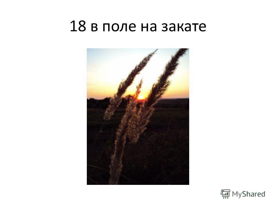 18 в поле на закате