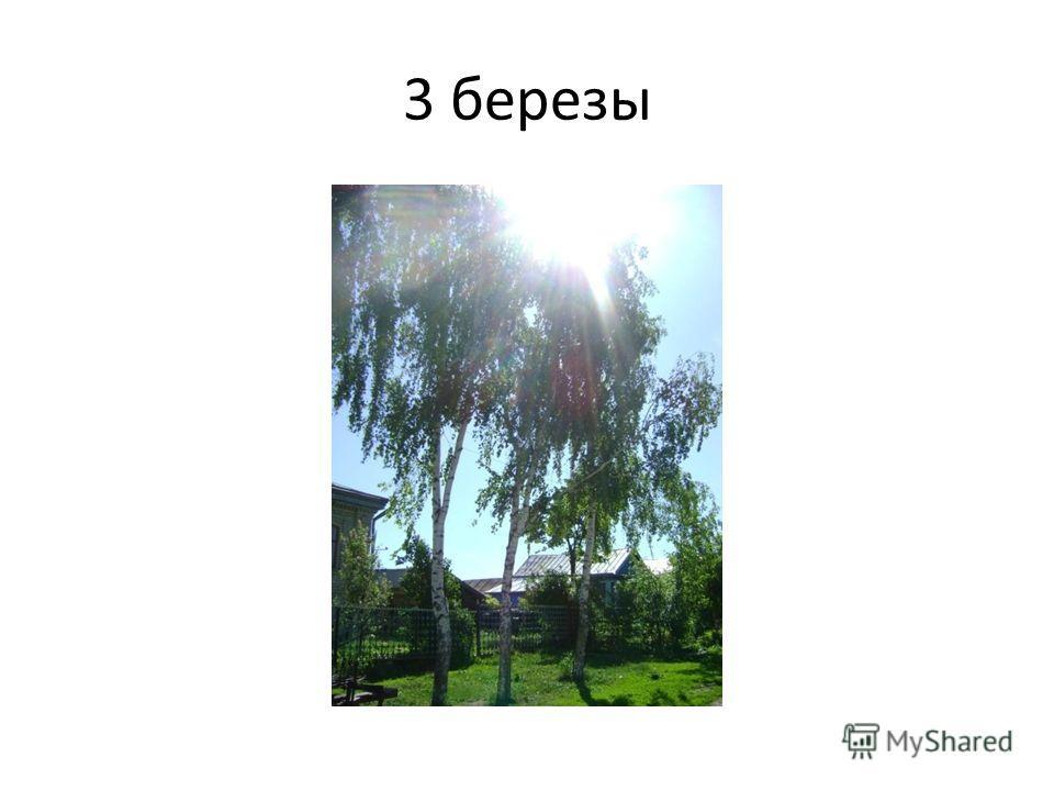 3 березы