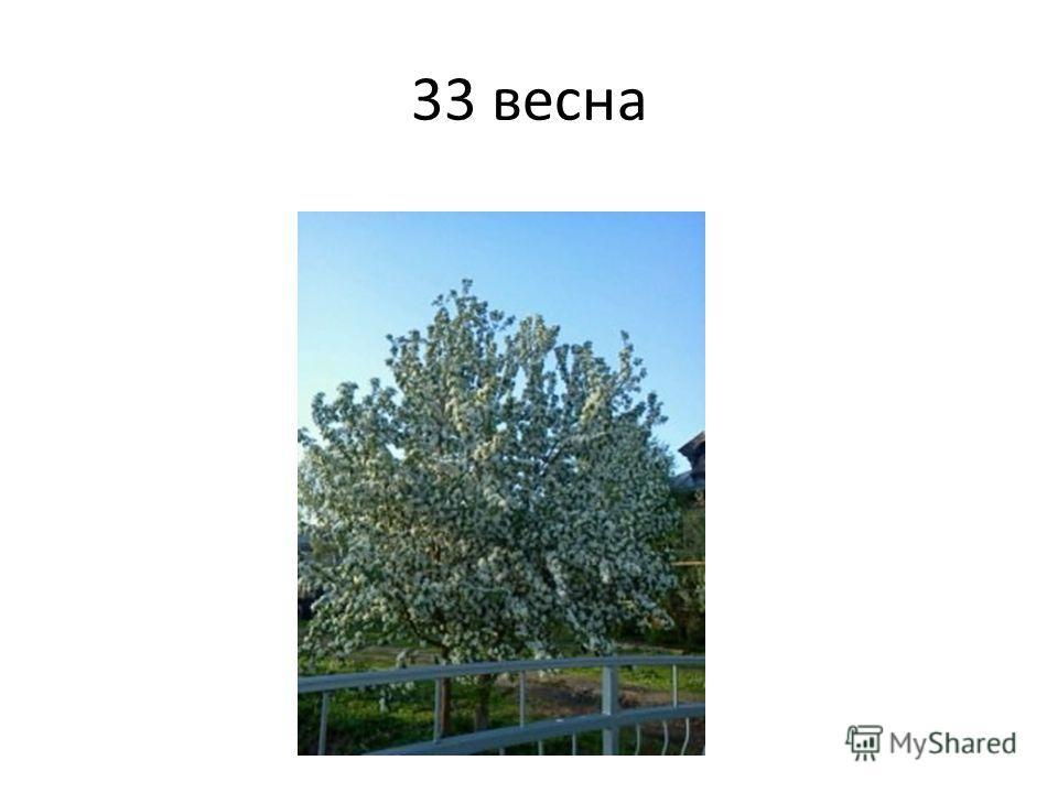 33 весна