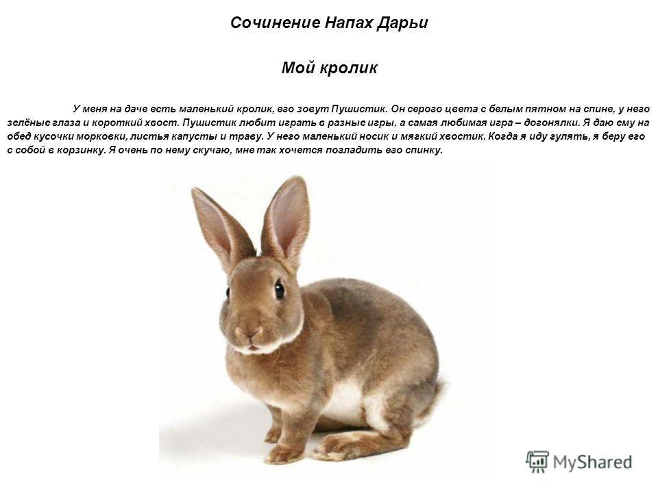 Сочинение Напах Дарьи Мой кролик У меня на даче есть маленький кролик, его зовут Пушистик. Он серого цвета с белым пятном на спине, у него зелёные глаза и короткий хвост. Пушистик любит играть в разные игры, а самая любимая игра – догонялки. Я даю ем