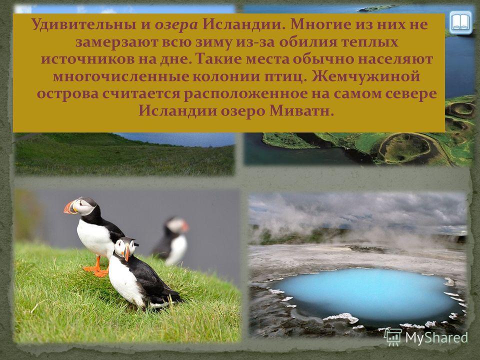 Удивительны и озера Исландии. Многие из них не замерзают всю зиму из-за обилия теплых источников на дне. Такие места обычно населяют многочисленные колонии птиц. Жемчужиной острова считается расположенное на самом севере Исландии озеро Миватн.