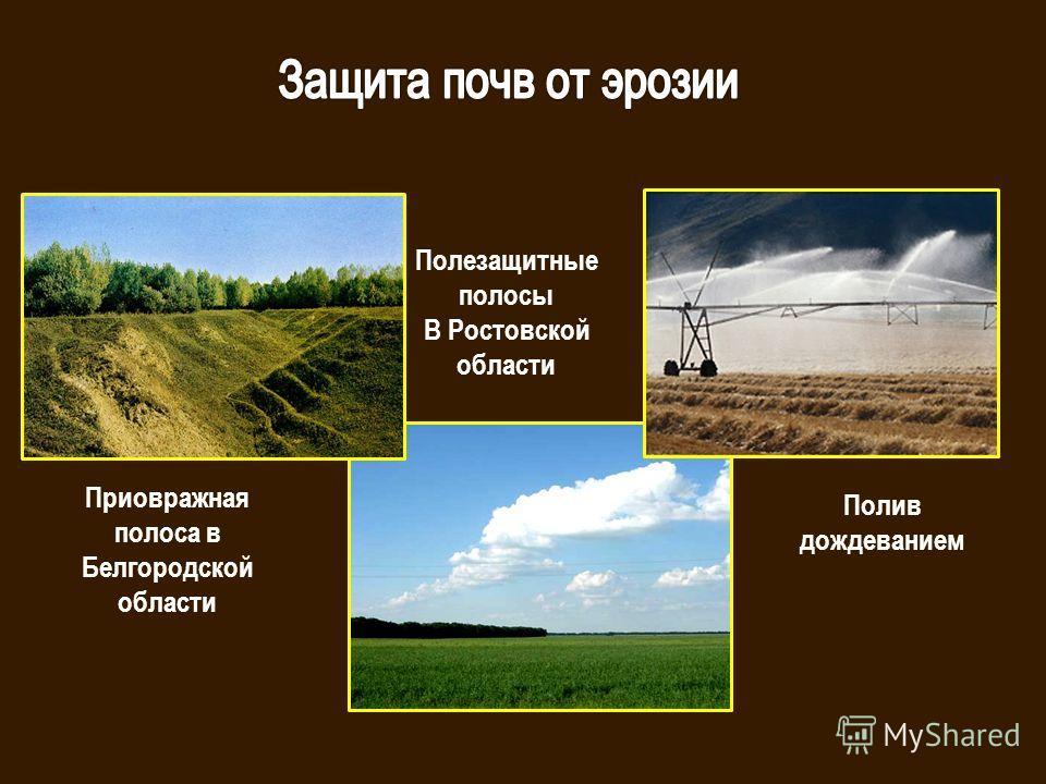 Полезащитные полосы В Ростовской области Приовражная полоса в Белгородской области Полив дождеванием