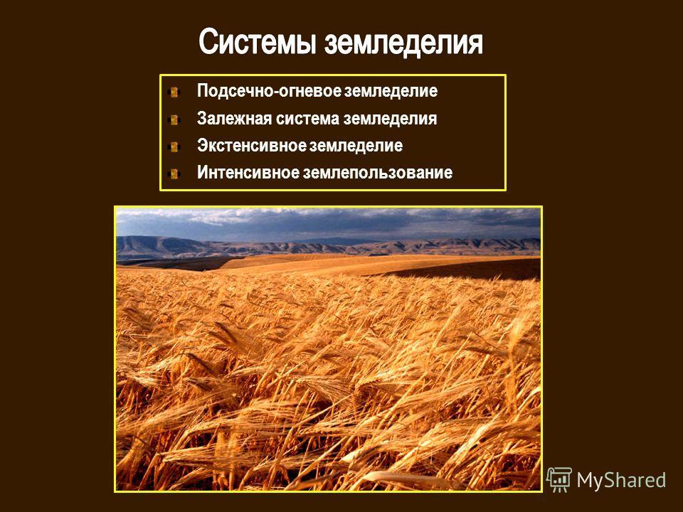 Подсечно-огневое земледелие Залежная система земледелия Экстенсивное земледелие Интенсивное землепользование