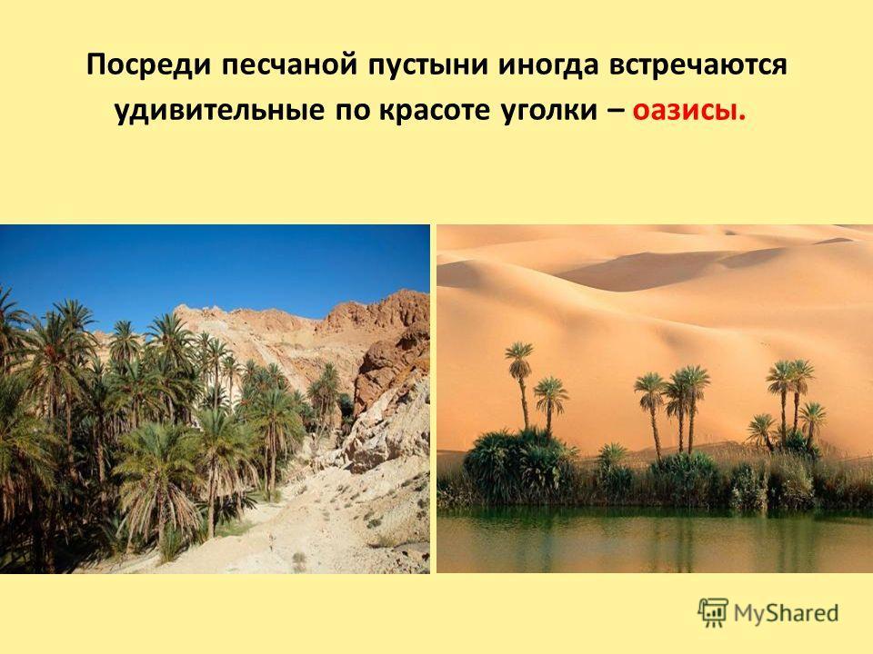Посреди песчаной пустыни иногда встречаются удивительные по красоте уголки – оазисы.