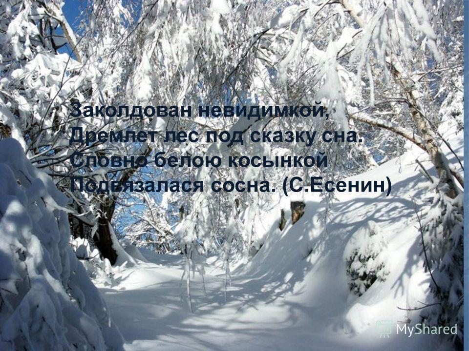 Заколдован невидимкой, Дремлет лес под сказку сна. Словно белою косынкой Подвязалася сосна. (С.Есенин) Заколдован невидимкой, Дремлет лес под сказку сна. Словно белою косынкой Подвязалася сосна. (С.Есенин) Заколдован невидимкой, Дремлет лес под сказк