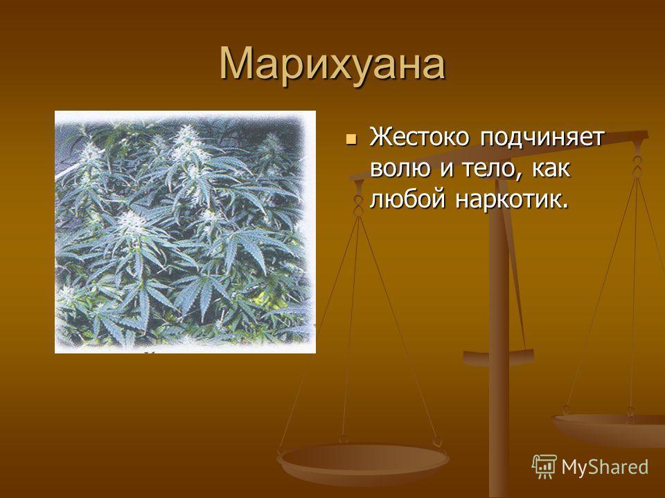 Марихуана Жестоко подчиняет волю и тело, как любой наркотик.