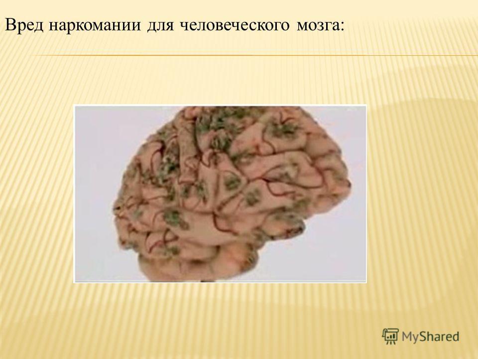 Вред наркомании для человеческого мозга: