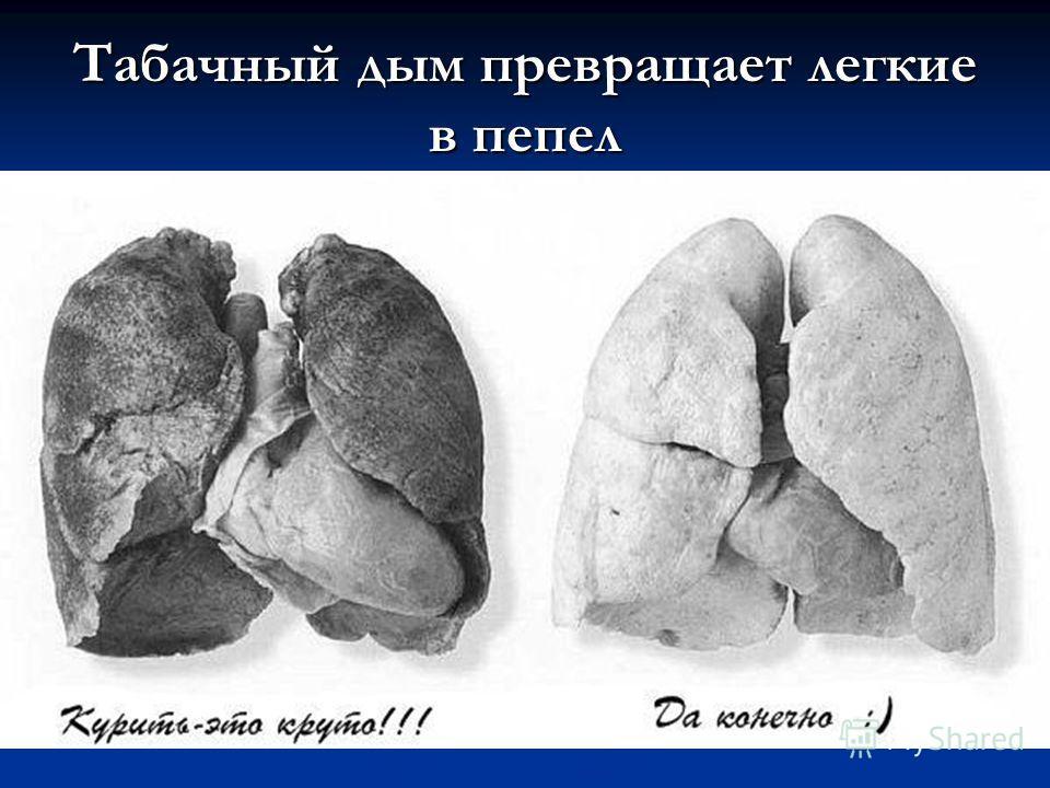 Табачный дым превращает легкие в пепел