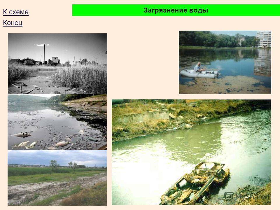 Загрязнение воды К схеме Конец