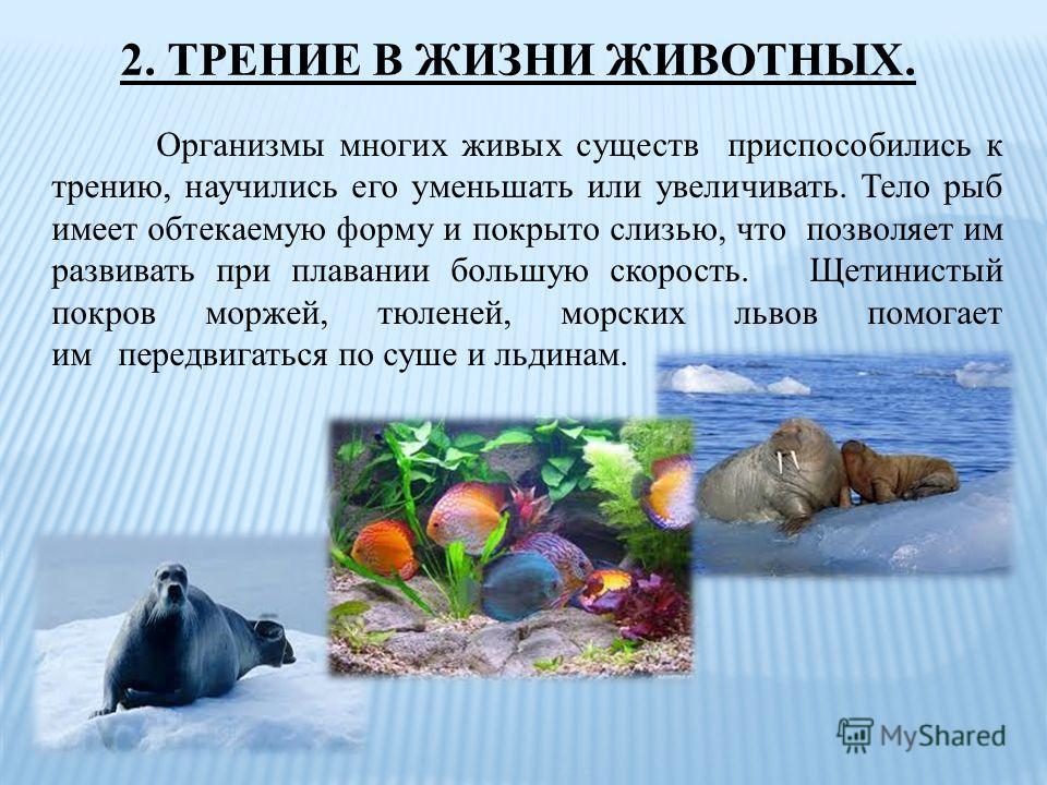 2. ТРЕНИЕ В ЖИЗНИ ЖИВОТНЫХ. Организмы многих живых существ приспособились к трению, научились его уменьшать или увеличивать. Тело рыб имеет обтекаемую форму и покрыто слизью, что позволяет им развивать при плавании большую скорость. Щетинистый покров
