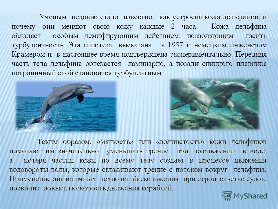 Ученым недавно стало известно, как устроена кожа дельфинов, и почему они меняют свою кожу каждые 2 часа. Кожа дельфина обладает особым демпфирующим действием, позволяющим гасить турбулентность. Эта гипотеза высказана в 1957 г. немецким инженером Крам