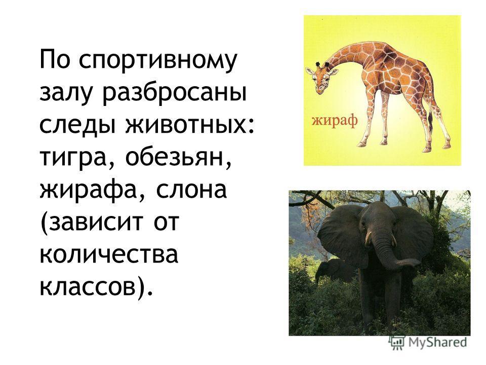 По спортивному залу разбросаны следы животных: тигра, обезьян, жирафа, слона (зависит от количества классов).
