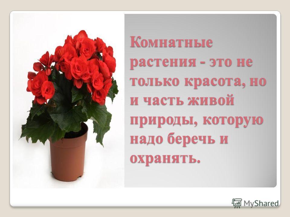 Комнатные растения - это не только красота, но и часть живой природы, которую надо беречь и охранять.