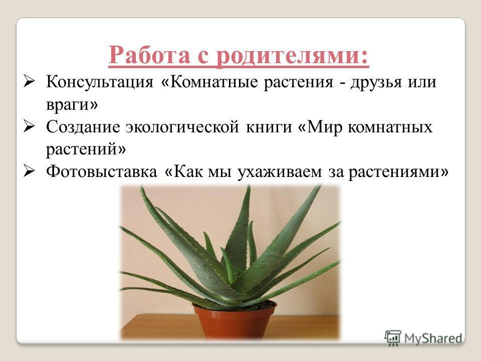 Работа с родителями: Консультация « Комнатные растения - друзья или враги » Создание экологической книги « Мир комнатных растений » Фотовыставка « Как мы ухаживаем за растениями »