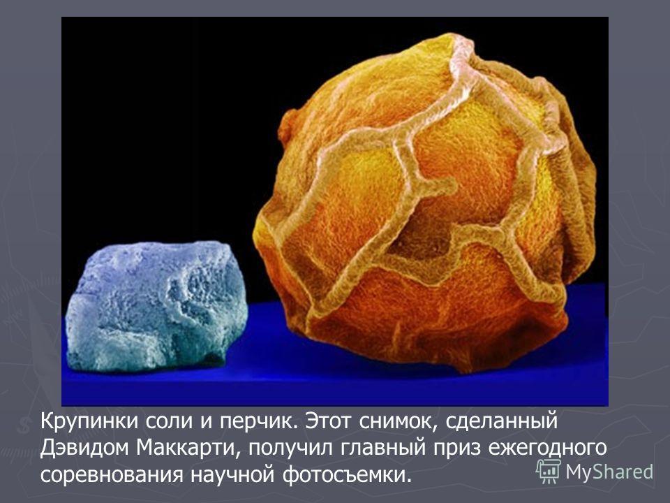 Крупинки соли и перчик. Этот снимок, сделанный Дэвидом Маккарти, получил главный приз ежегодного соревнования научной фотосъемки.