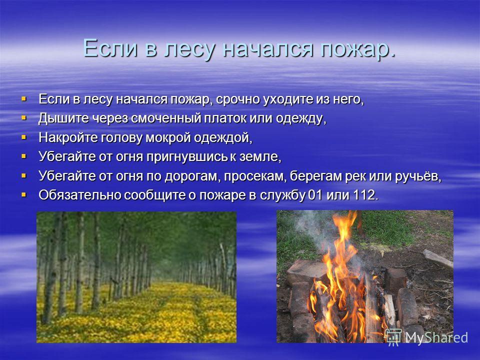 Если в лесу начался пожар. Если в лесу начался пожар, срочно уходите из него, Если в лесу начался пожар, срочно уходите из него, Дышите через смоченный платок или одежду, Дышите через смоченный платок или одежду, Накройте голову мокрой одеждой, Накро