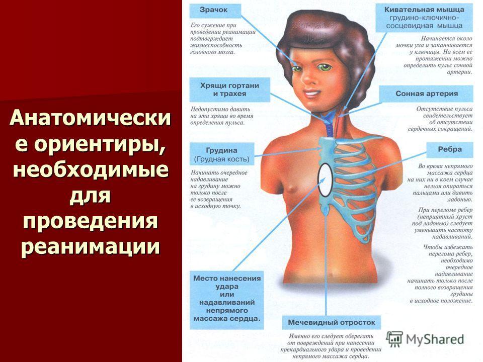 Анатомически е ориентиры, необходимые для проведения реанимации