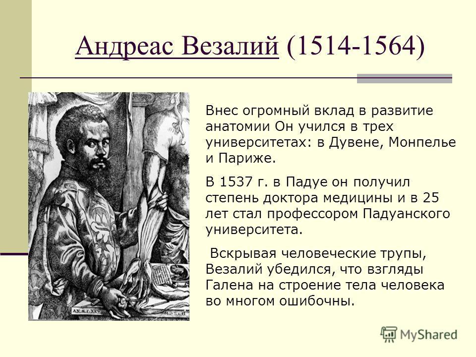 Андреас Везалий (1514-1564) Внес огромный вклад в развитие анатомии Он учился в трех университетах: в Дувене, Монпелье и Париже. В 1537 г. в Падуе он получил степень доктора медицины и в 25 лет стал профессором Падуанского университета. Вскрывая чело