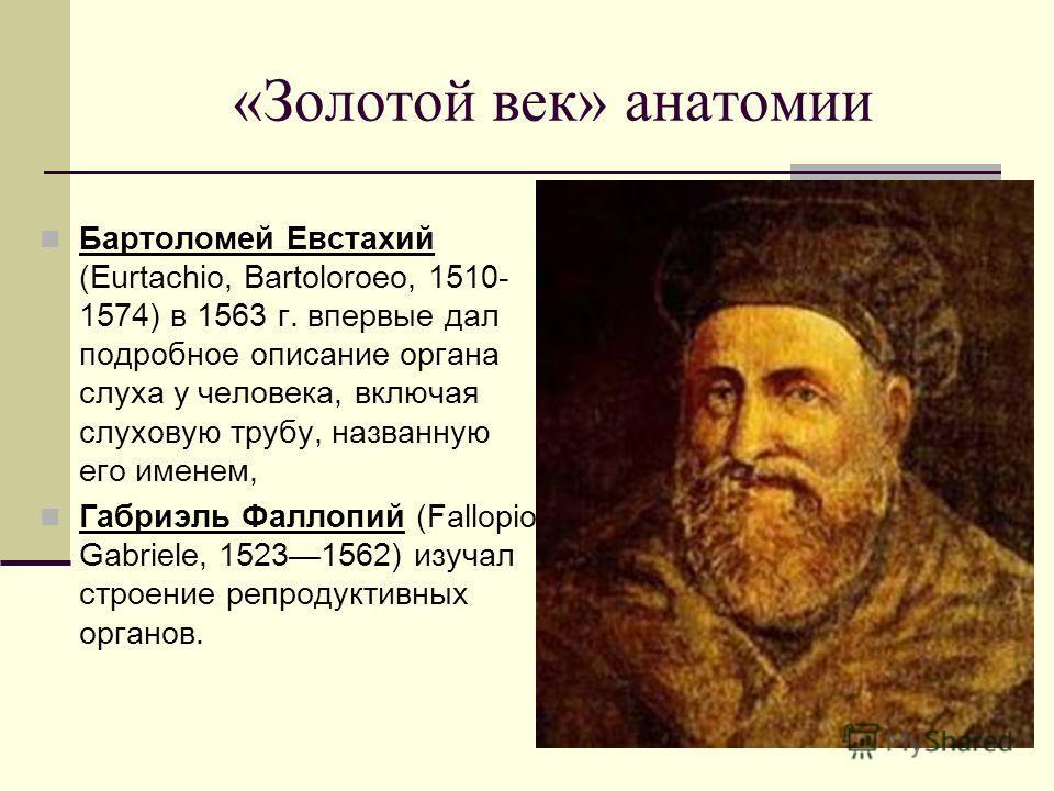 Бартоломей Евстахий (Eurtachio, Bartoloroeo, 1510- 1574) в 1563 г. впервые дал подробное описание органа слуха у человека, включая слуховую трубу, названную его именем, Габриэль Фаллопий (Fallopio, Gabriele, 15231562) изучал строение репродуктивных о