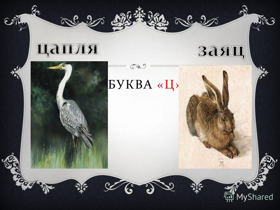 БУКВА « Ц »