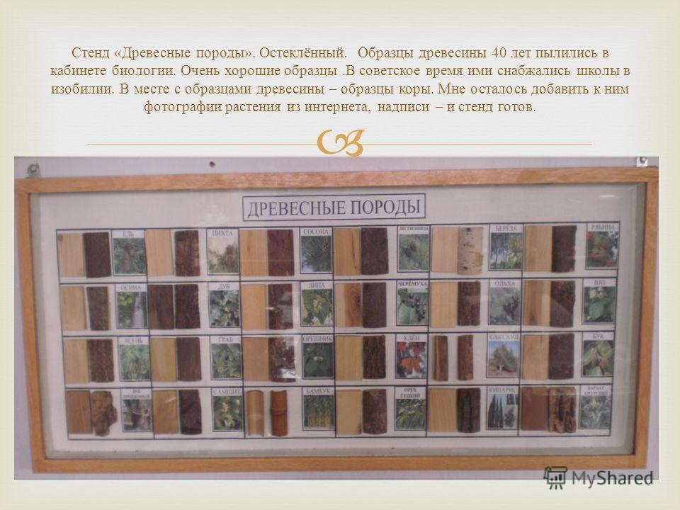 Стенд « Древесные породы ». Остеклённый. Образцы древесины 40 лет пылились в кабинете биологии. Очень хорошие образцы. В советское время ими снабжались школы в изобилии. В месте с образцами древесины – образцы коры. Мне осталось добавить к ним фотогр