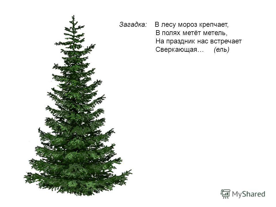 Загадка: В лесу мороз крепчает, В полях метёт метель, На праздник нас встречает Сверкающая… (ель)