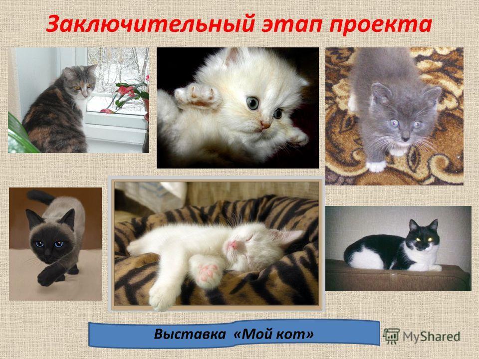 Подарок для кошки своими руками Шарики из войлока «Конфета» Тканевые рулончики Бантик из ткани