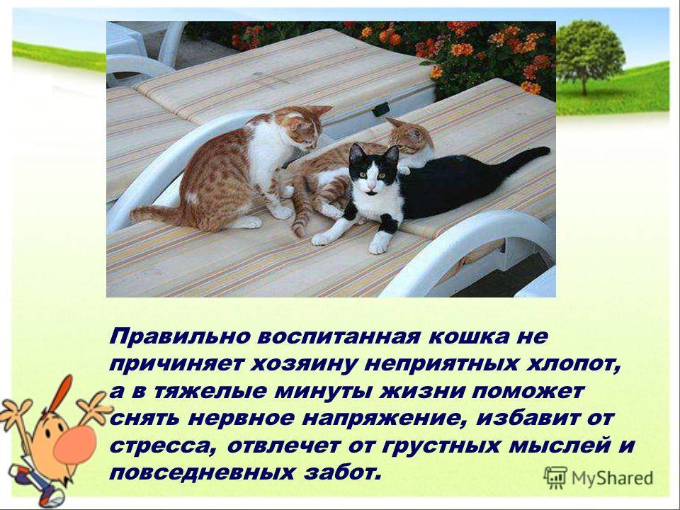 Правильно воспитанная кошка не причиняет хозяину неприятных хлопот, а в тяжелые минуты жизни поможет снять нервное напряжение, избавит от стресса, отвлечет от грустных мыслей и повседневных забот.