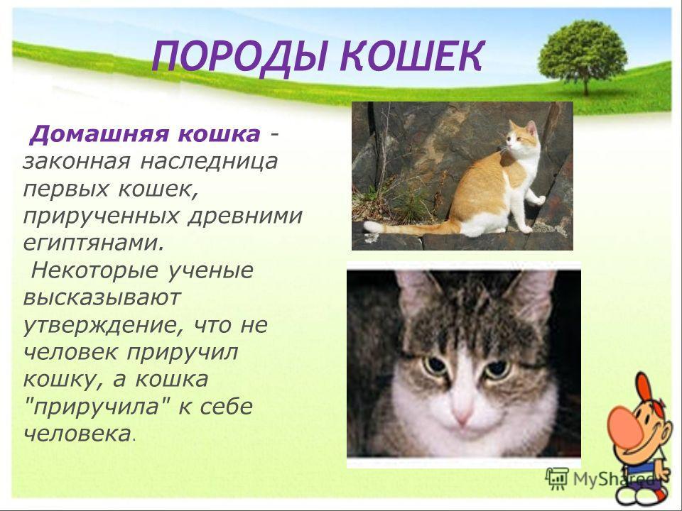 ПОРОДЫ КОШЕК Домашняя кошка - законная наследница первых кошек, прирученных древними египтянами. Некоторые ученые высказывают утверждение, что не человек приручил кошку, а кошка приручила к себе человека.