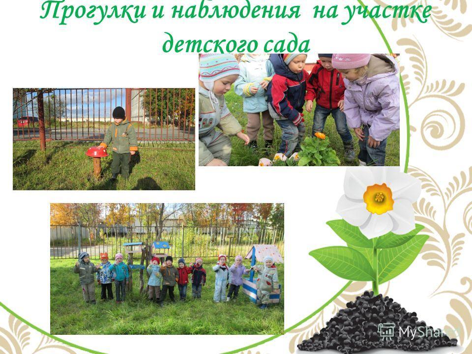 Прогулки и наблюдения на участке детского сада